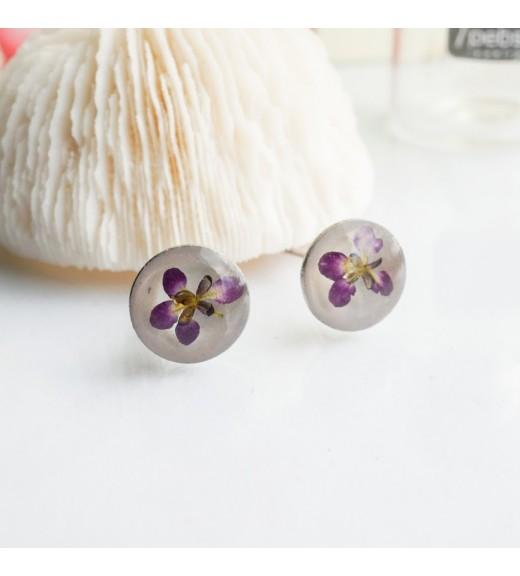 Alyssum sp. - Floare de Miere. Purple Flower imagine
