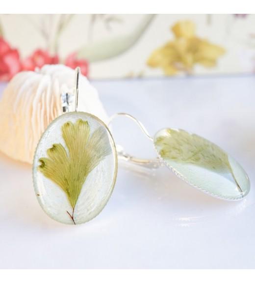 Adiantum cuneatum - Maidenhair Fern. Pearl Green