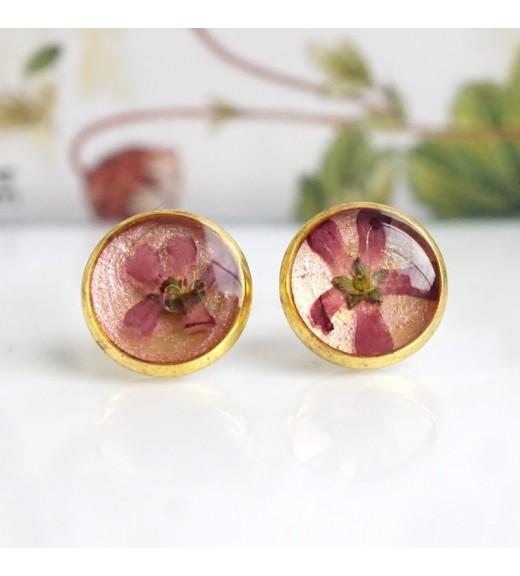 Alyssum sp. - Floare de Miere. Pearl Pink imagine