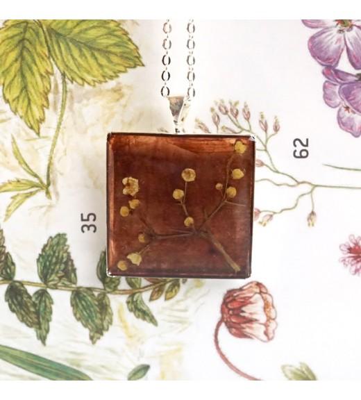 Mimosa pudica - Mimosa. Pearl Amber
