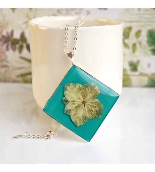 Hydrangea macrophylla - Hortensie. Turquoise imagine