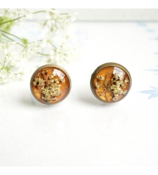 Daucus carota - Dantela Reginei. Portocaliu Perlat