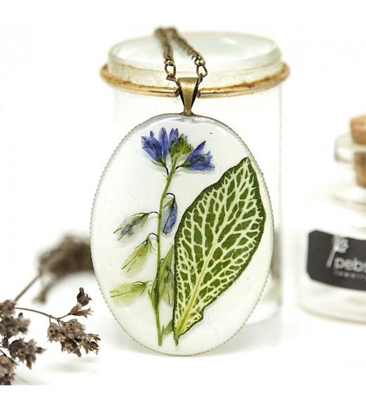 Fittonia albivenis & Floare De Câmp
