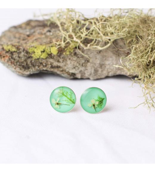 Daucus carota & Hylocomium splendes. Green Mint