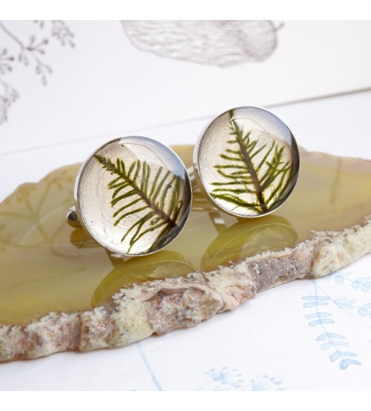 Hylocomium splendens - Mușchi De Pădure. Butoni De Argint