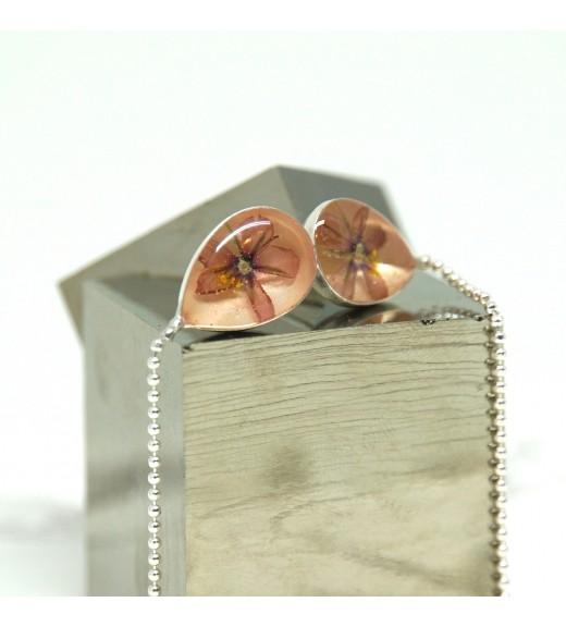 Anagallis arvensis - Scânteiuță Roze