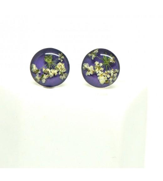 Daucus carota. Floare De Morcov Sălbatic. Purple