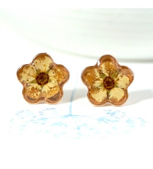 Spiraea x vanhouttei - Flori De Cununiță. Rose Gold