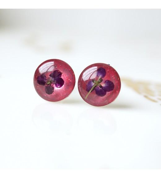Alyssum sp. - Floare de Miere. Pearl Pink