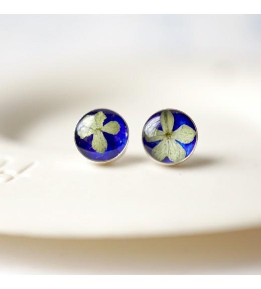 Viburnum opulus. Tint Blue