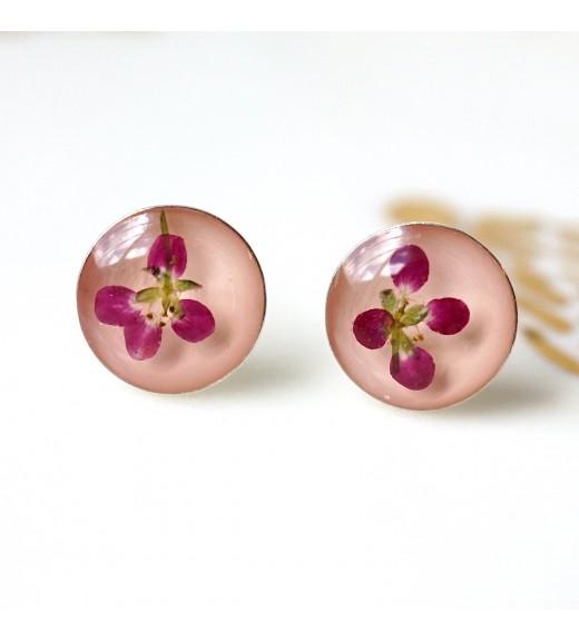 Alyssum sp. - Floare de Miere. Salmon Pink