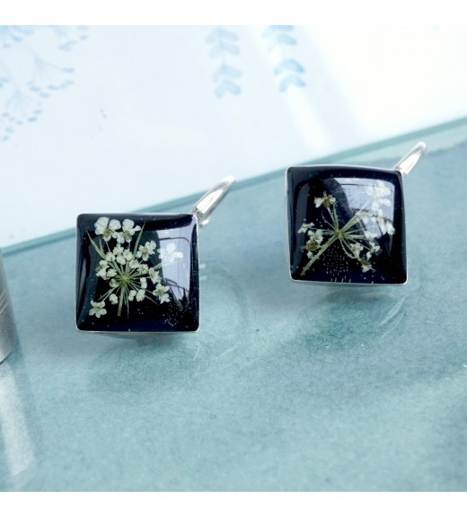 Daucus carota - Flori De Dantela Reginei. Pearly Black