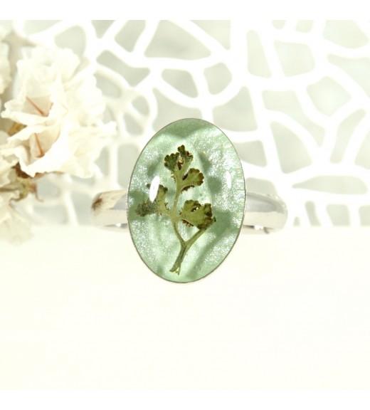 Asplenium ruta-muraria - Ferigă. Pearl Mint