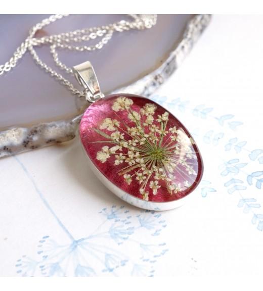 Daucus carota - Queen Anne's Lace Flower. Burgundy