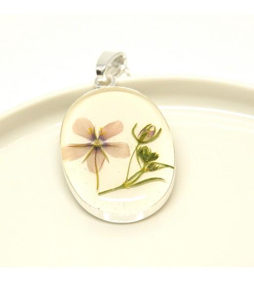 Anagallis arvensis. Floare De Scânteiuță