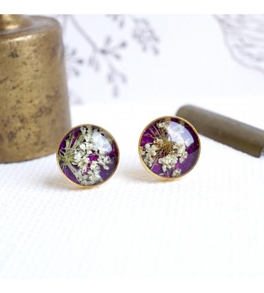 Daucus carota - Dantela Reginei. Purple & Gold