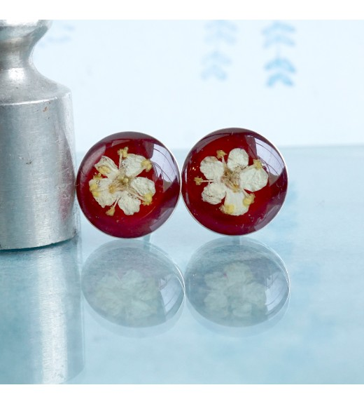 Sambucus nigra - Floricele De Soc. Red Velvet