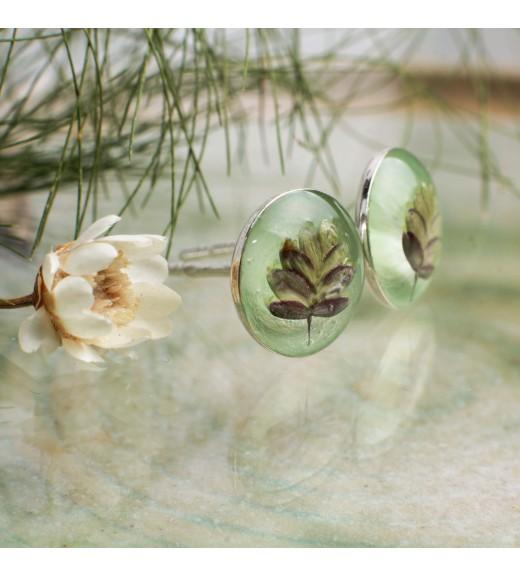 Briza minor - Tremurici. Pearl Mint