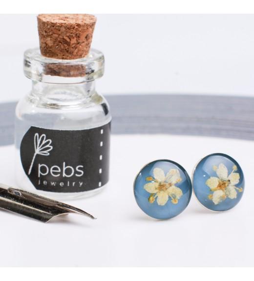 Sambucus nigra - Flori de Soc. Albastru Cenușiu
