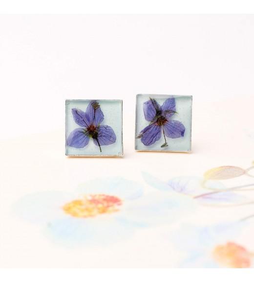 Veronica chamaedrys - Flori de Șopârliță. Aqua Blue